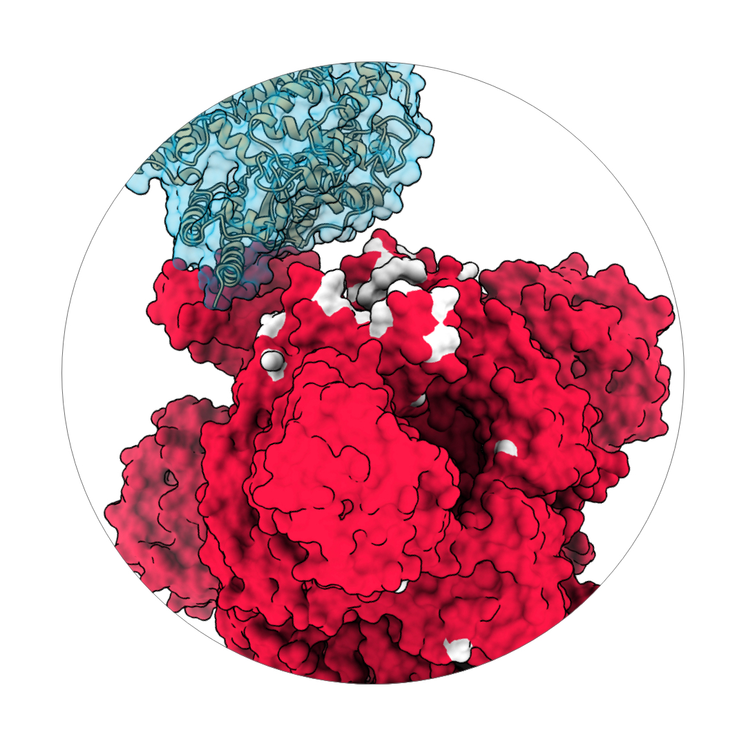 Structure of viral protein